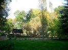 Park - dawniej_6
